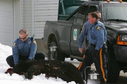 The New Jersey Game and Fish Bear Response unit tranquilized a black bear in Wayne that was terrorizing the neighborhood. Wayne authorities tracked the bear to the back porch of a home on Fox Hill last week. New Jersey is expected to announce a bear-management plan.