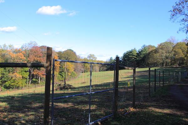 reforesting of meadow at Baldpate Mountain