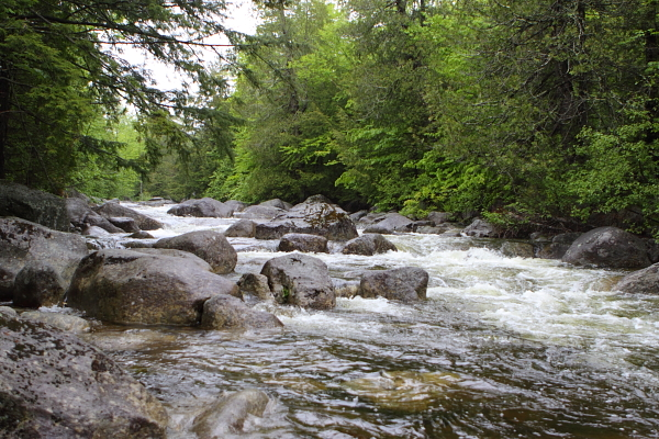 wild Adirondack stream - headwaters of the Hudson