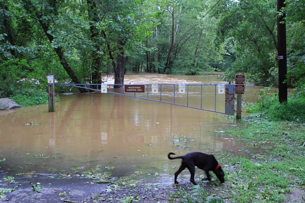 Campers need canoes - &quot;No Pets in Campground&quot;! Can't you read the sign!