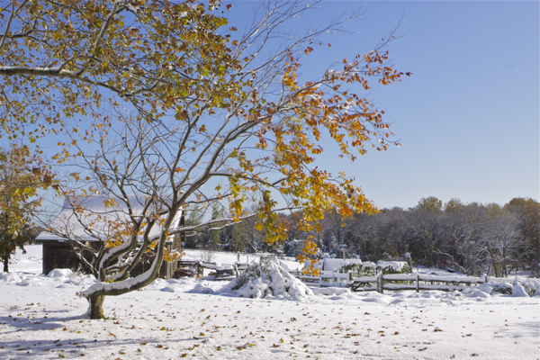 The Day After The October Snow (10/30/11)