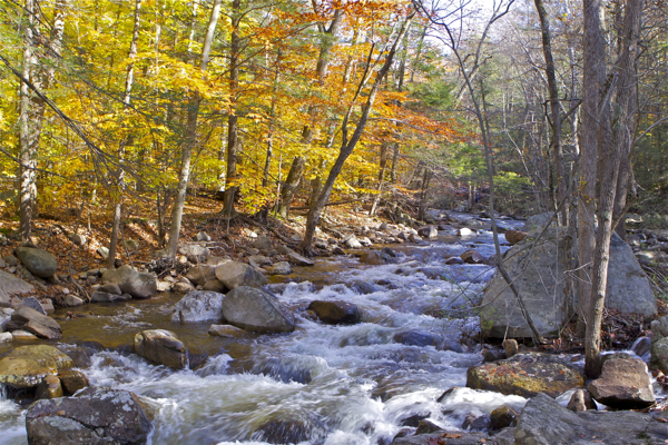 A healthy stream flows - but not in Jersey (Harriman Park, NY)