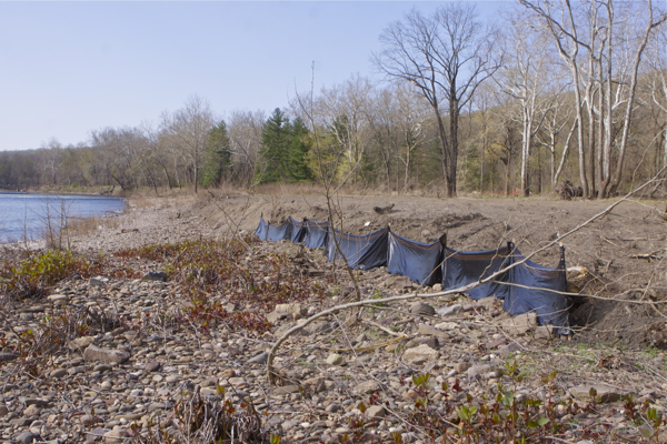 Bulls Island - erosion controls along 100 feet of 450 foot fill (3/28/12)