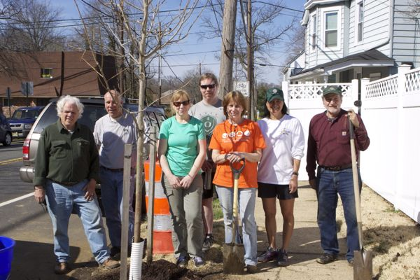 Shade Tree Committee volunteers plant 3 plane trees on Burlington St.
