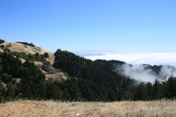 above the fog bank