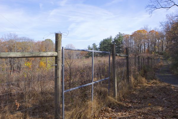Baldpate Mountain reforestation project (11/8/14)