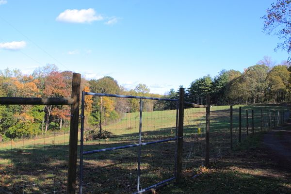 Baldpate Mountain reforestation site (10/17/10)