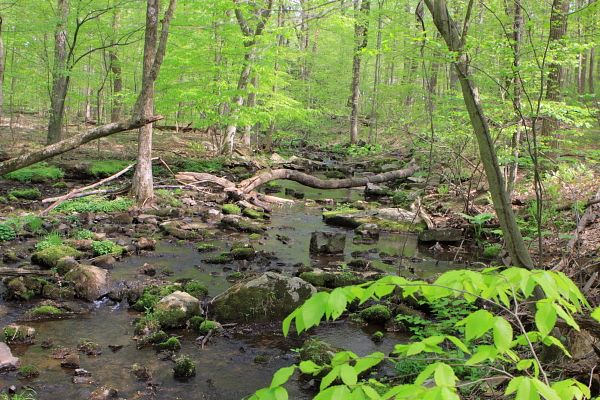 Alexauken Creek, West Amwell, NJ – Category 1 stream – downed trees provide habitat.