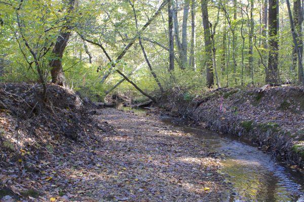 severe stream bank erosion along tributary to Crosswicks Creek