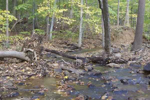 stream just below Fenimore landfill. Severe erosion, physical impairment. Even if leachate seeps had no impact, runoff from landfill creates erosion and sedimentation. DEP claims sediment are #2 cause of impairment to Drakes Brook.