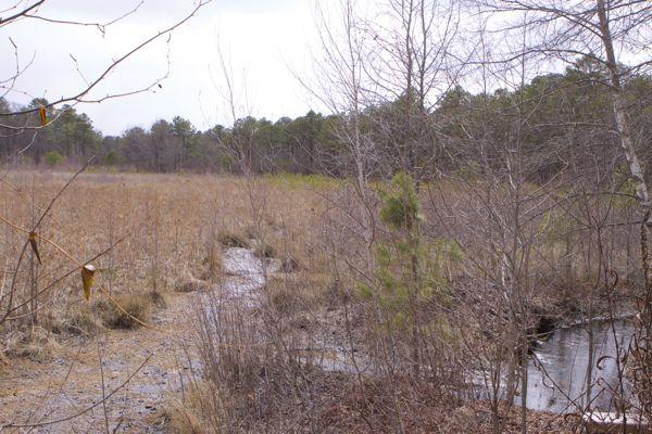 headwaters of Black Run, Evesham NJ
