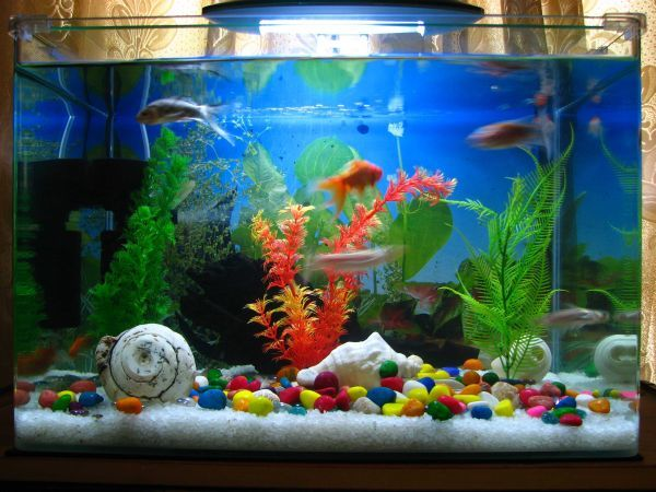 your fish tank has better water treatment