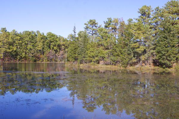 A Pinelands scene
