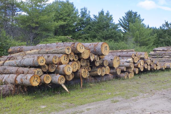 saw a lot of logging in Maine woods