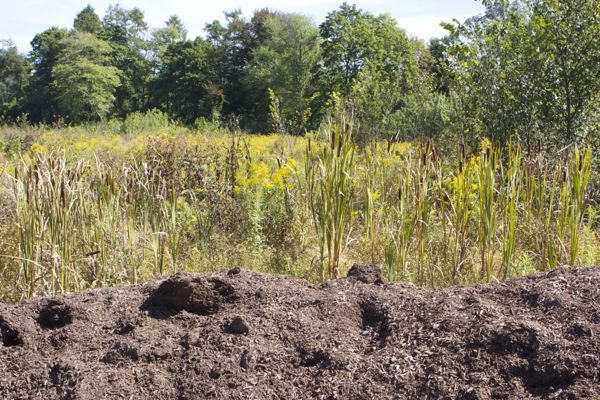 nutrients from organic composting material discharge directly to wetland - no controls