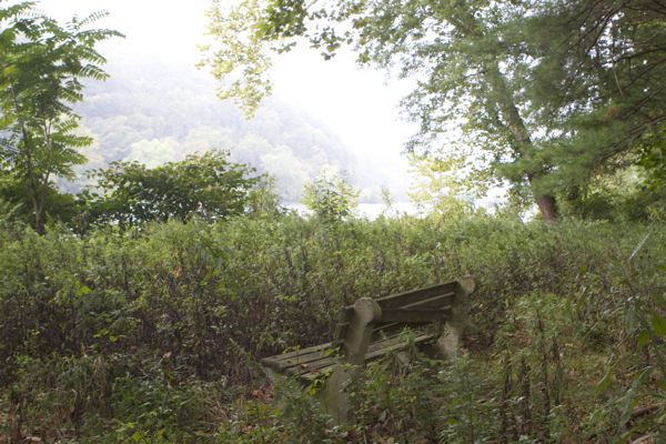 Delaware Rive views obscured by overgrown weeds