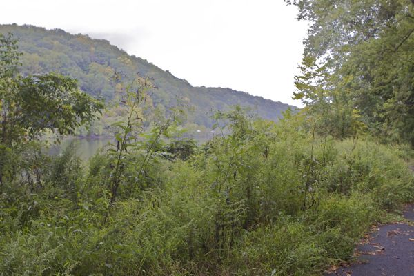 gorgeous river views obscured by weeds