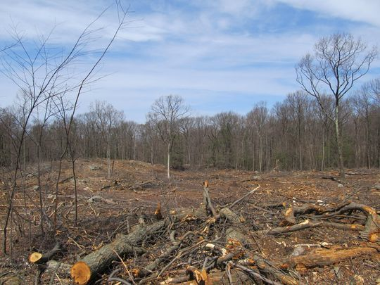 """DEP calls this a """"seed tree treatment"""" - Orwell's term for a clearcut"""