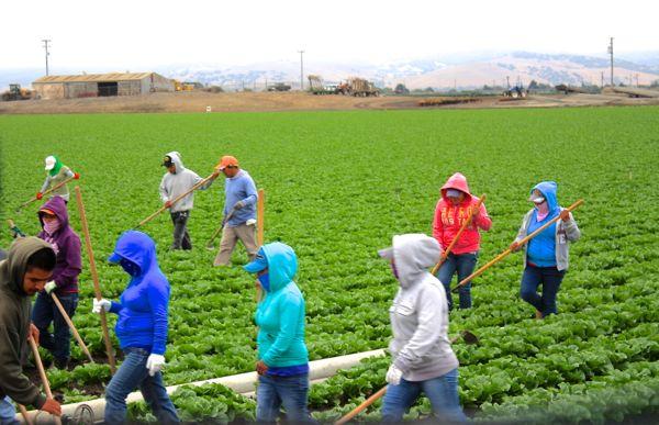 farmworkers in Salinas, California