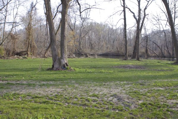 riparian vegetation along Blacks Creek was destroyed and grass planed. This land is under water on full moon high tide.
