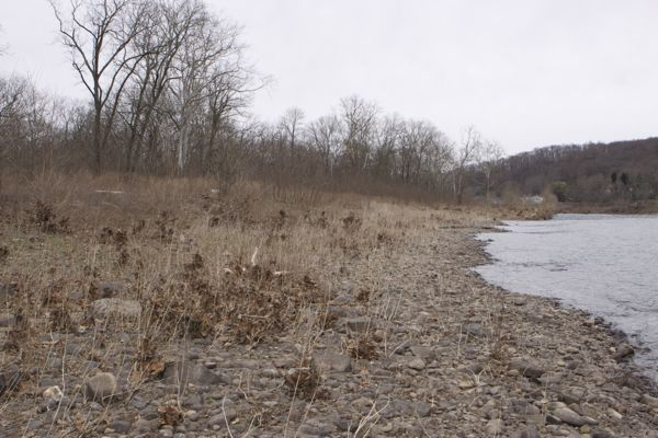ugly scar remains from where DEP illegally bulldozed riparian vegetation and disposed of sediments and waste along river. DEP's restoration plan to USACE is a failure.