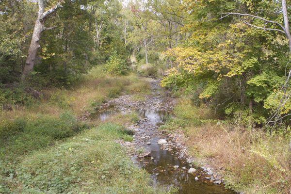 This is what stream low flow looks like - Alexauken Creek (9/29/15)