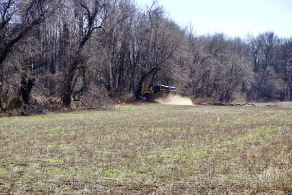 trees cut down in riparian zone - about 10 feet from stream bank