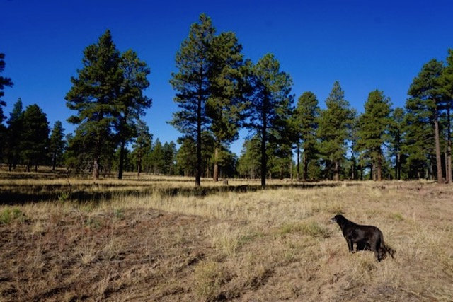Coconino National Forest (just outside Flagstaff Az)