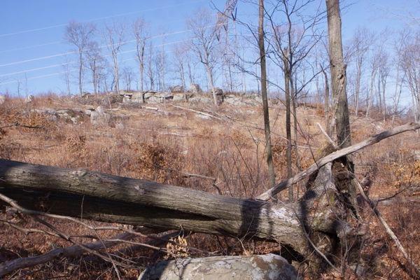 NJ Audubon and DEP logging on Sparta Mountain